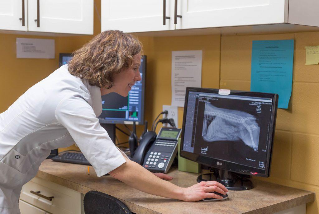 Kamloops Veterinary Clinic