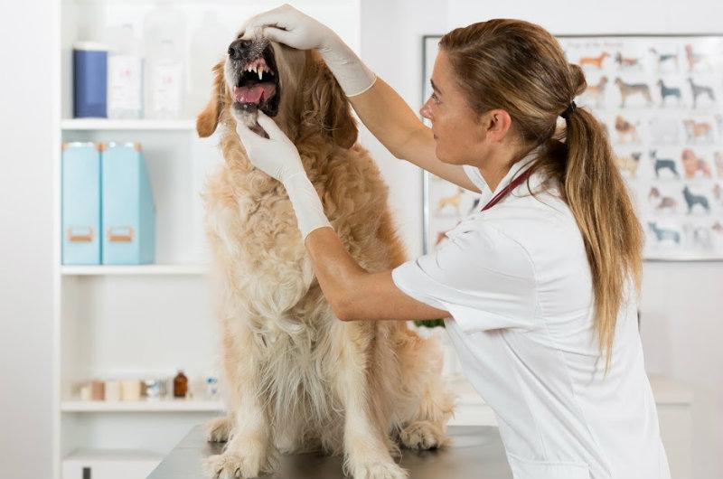 Dog-dental-surgery