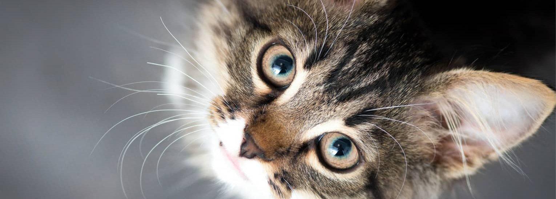 Homepage-cute-cat-slide